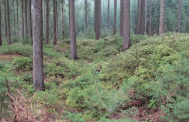 Cínové sejpy v údolí potoka Greifenbach