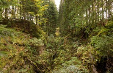 Hornická krajina Eibenstock