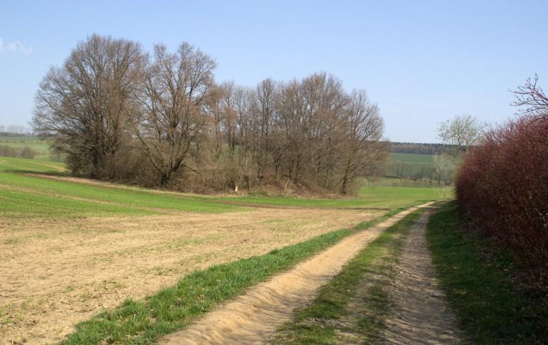 4.6.2-DE_Goldbachthal_Haldenlandschaft.jpg