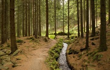 Röhrgraben Water Ditch